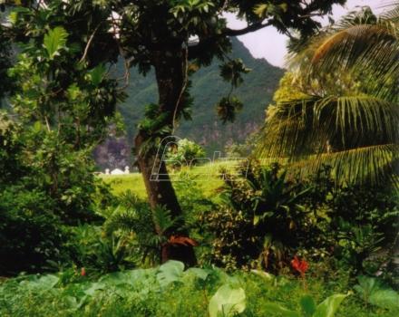 Nestanak tropskih tresetišta ubrzava globalno zagrevanje